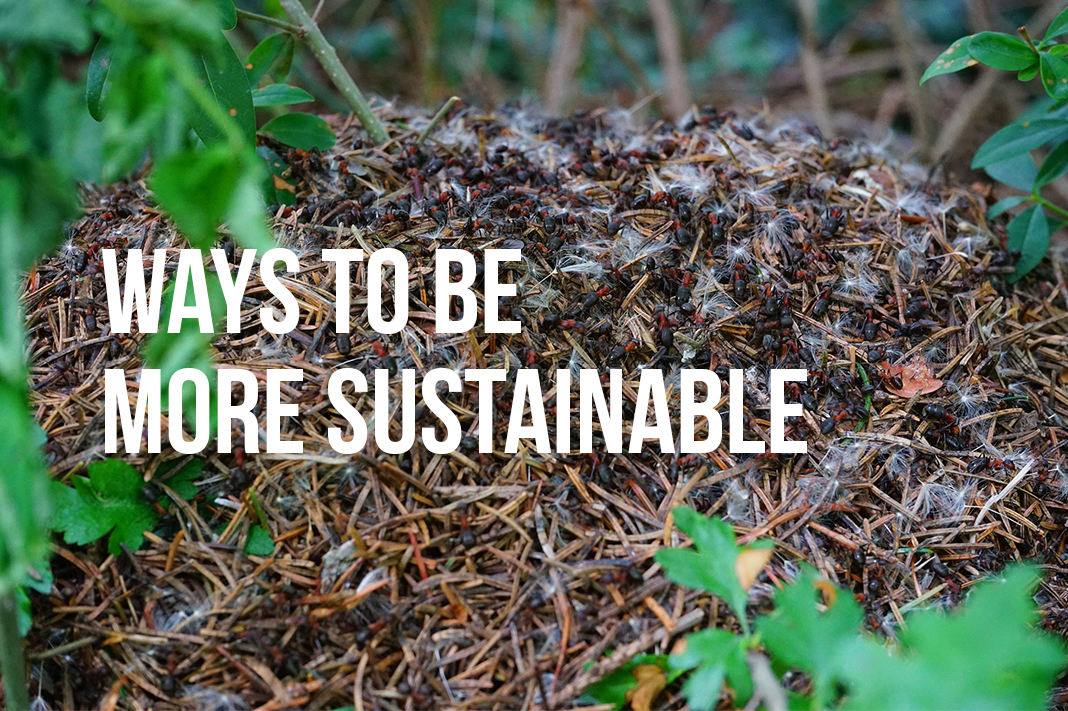 ways to be more sustainable practices zero waste earth day
