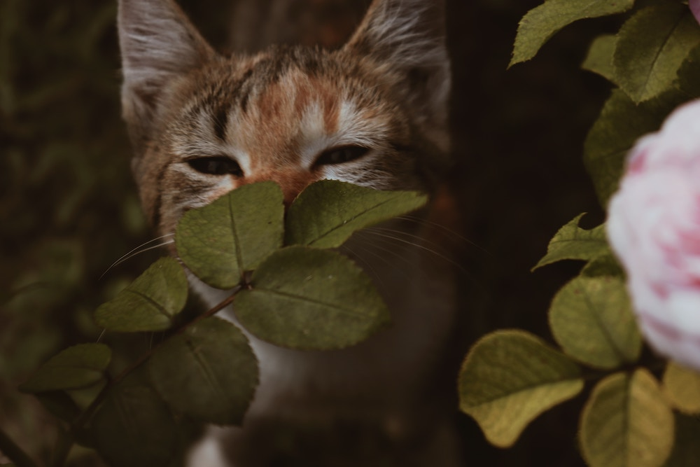 pet safe plant for cat smelling leaves