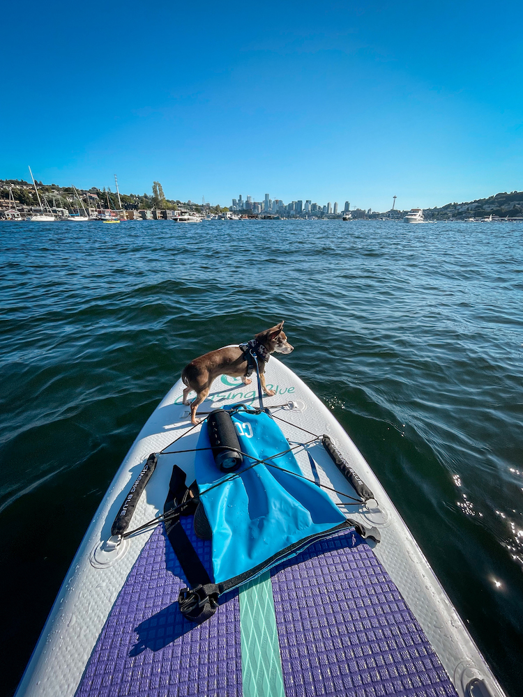Outdoor Masters stand up paddle board with bebot the dog